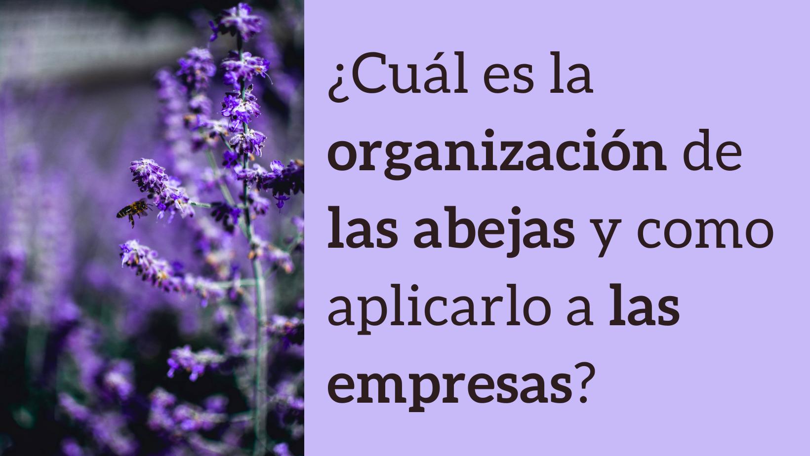 5d71e-organizacion-abejas-empresas-networking-bweb.png