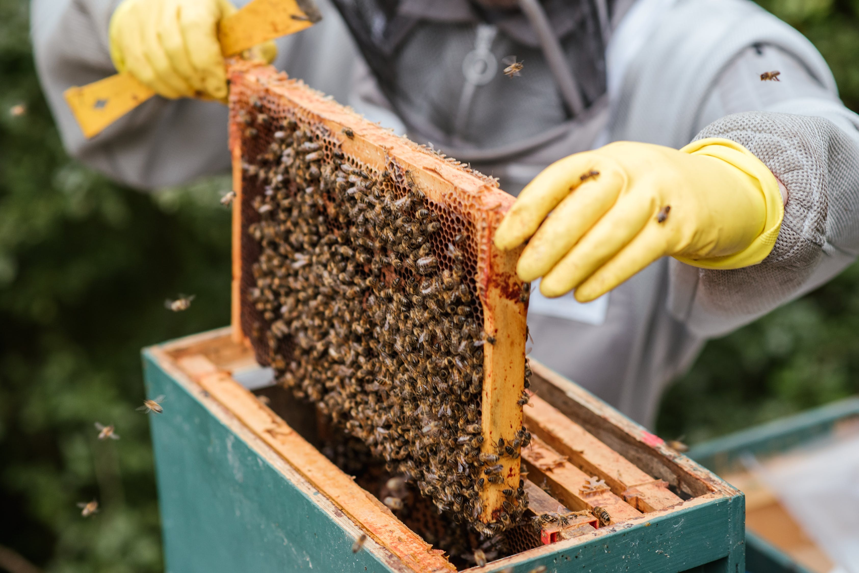 organizacion abejas como aplicarlo empresas